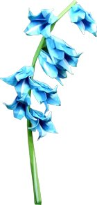 origami bluebell clipart picture