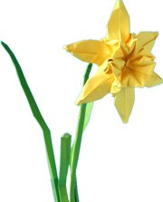clipart of an origami narcissus