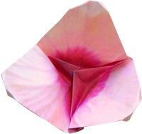 cute and small origami flower picture