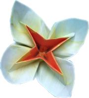clipart of a cute white origami flower