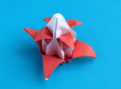 flower of an advanced origami christmas cactus