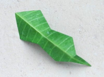 single origami holly leaf