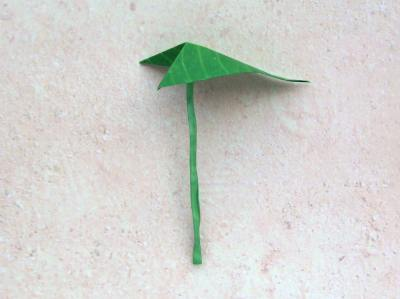 leaf of an origami anthurium