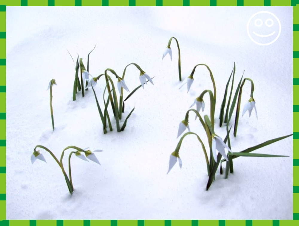 printable card with origami snowdrops in the snow