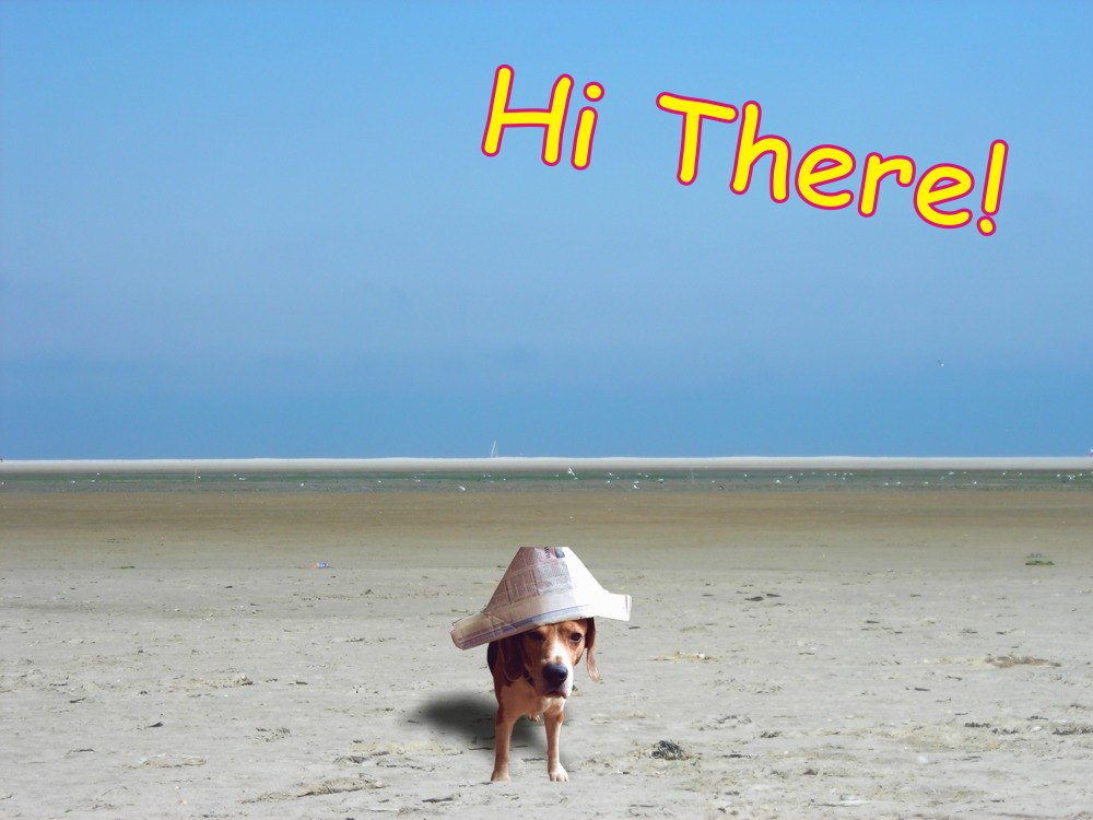 free card of a dog with a paper hat on the beach