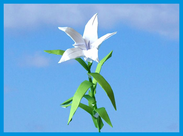white origami lily with five petals