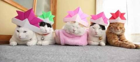 Cats with origami Hats