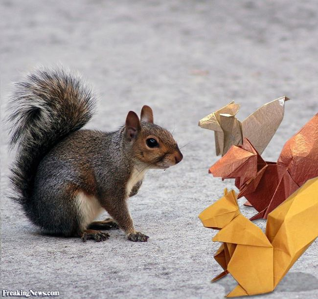 Real Squirrel and some origami Squirrels