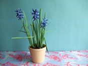 printable patterns for an origami grape hyacinth