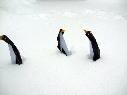 funny penguins shivering in the cold