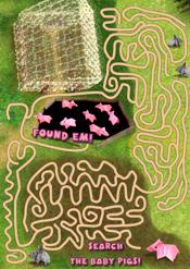 Maze with baby pigs